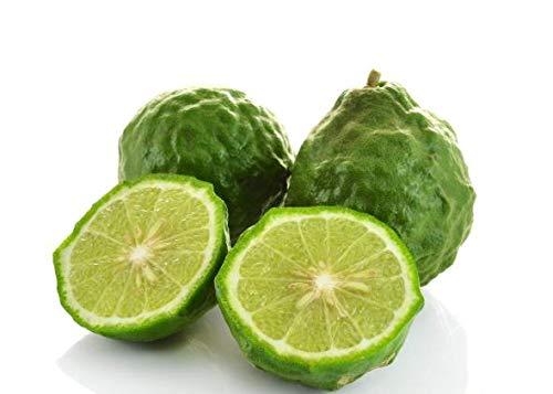 Bio Kaffir-Limette 1 Pflanze 30 cm Citrus Hystrix Kaffir Lime Kaffernlimette Papeda Combava