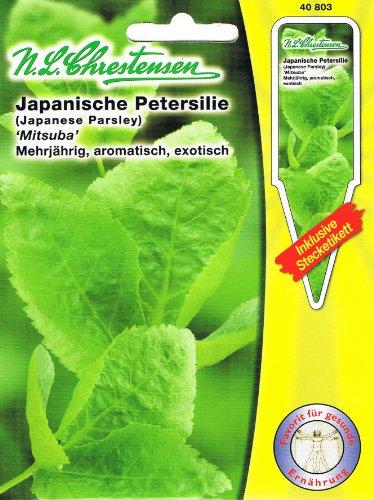 Japanische Petersilie 'Mitsuba' Asia Salate , mehrjährig, aromatisch ,exotisch ( mit Stecketikett)
