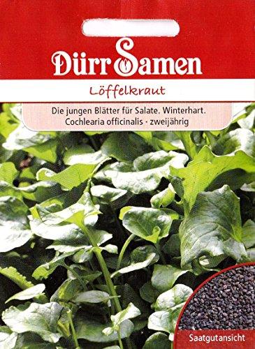Löffelkraut, winterhart, Cochlearia offinalis, ca. 100 Samen